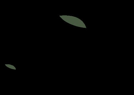 olio gasparri logo verticale