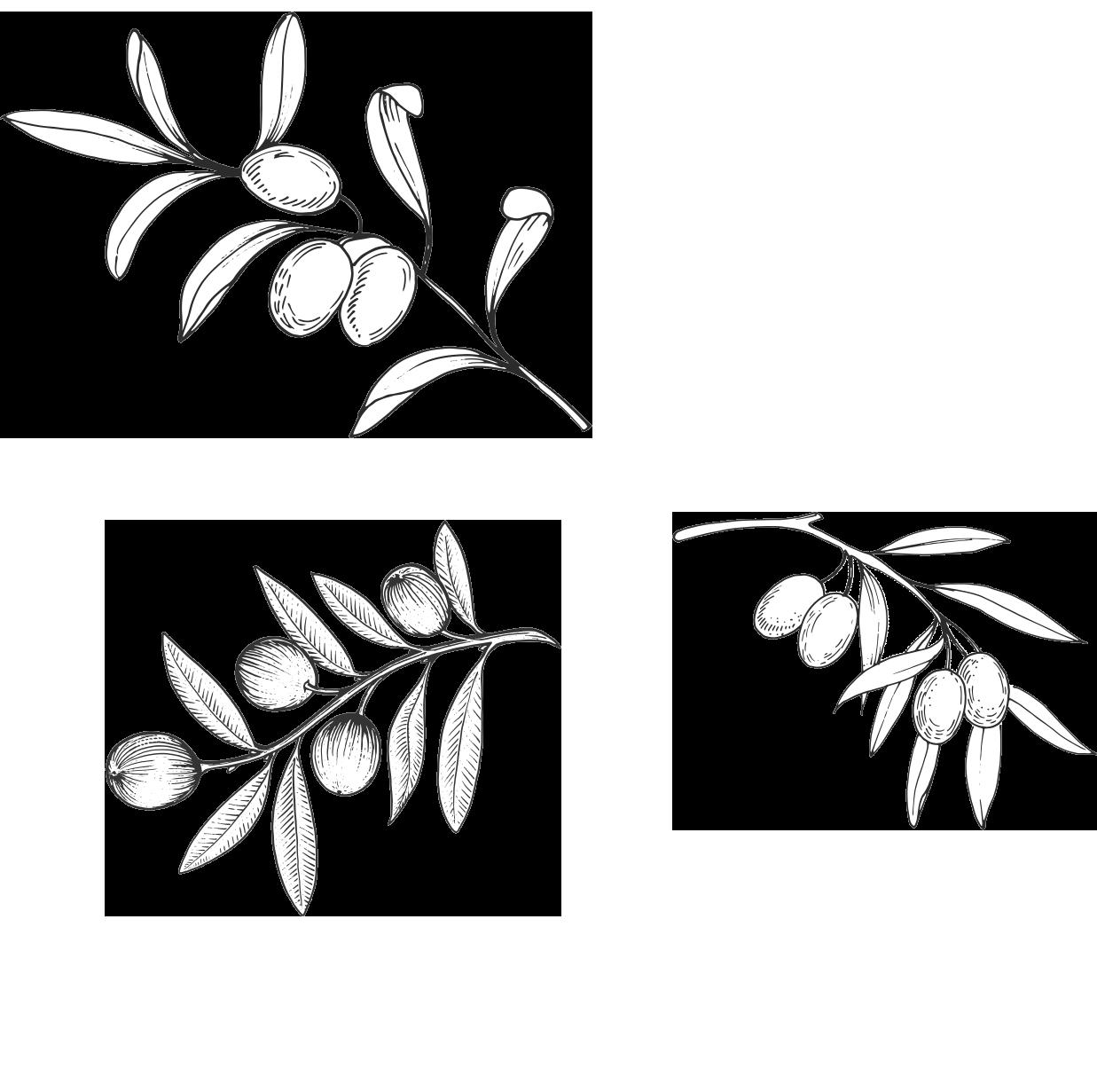 home-territorio-storia_0001_piante
